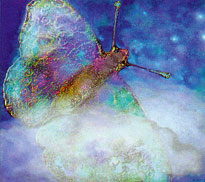 Solarised Butterfly by Patricia Ferry