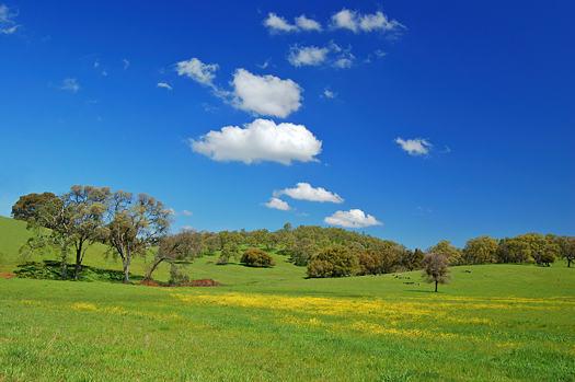 Wildflower meadow in Springtime, near Chinese Camp, California