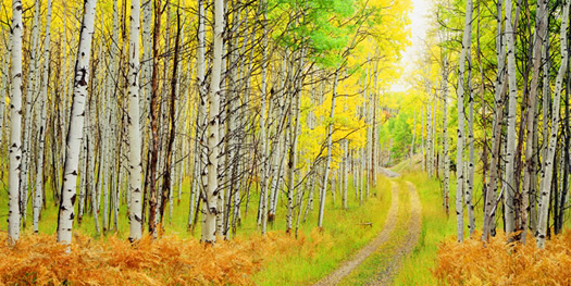 Routt National Forest Road. Routt National Forest near Steamboat Springs. by John Fielder